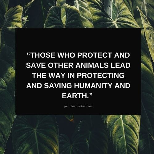 Protecting wildlife quotes images