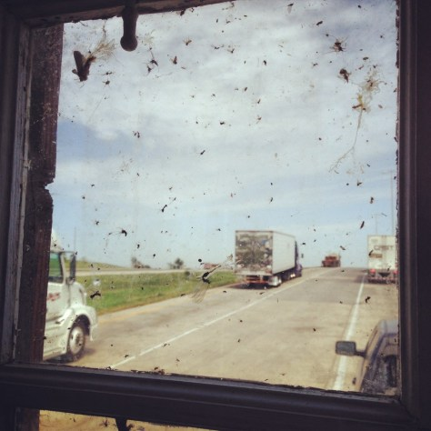 The shantyboat splattered bug collection