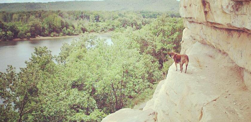 Here's @gooddoghazel perched on the side of a cliff at Painted Bluff
