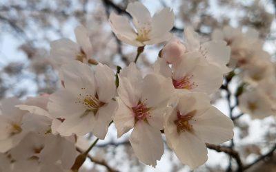 Limpieza de primavera. 5 consejos prácticos para hacerla rápida, efectiva y sin cansarnos