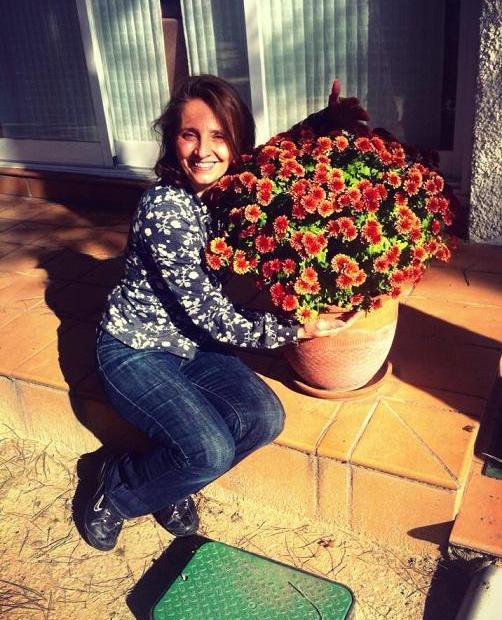 ¿Cuándo se podan los crisantemos?