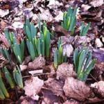 Emergen Los Narcisos