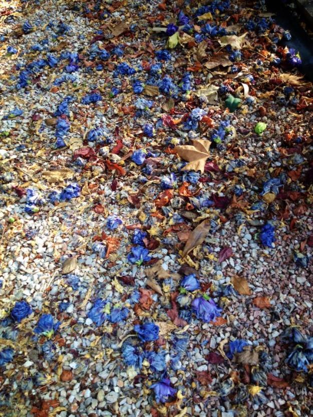 Septiembre, hojas secas en el Jardin de pepeplana.com.jpg