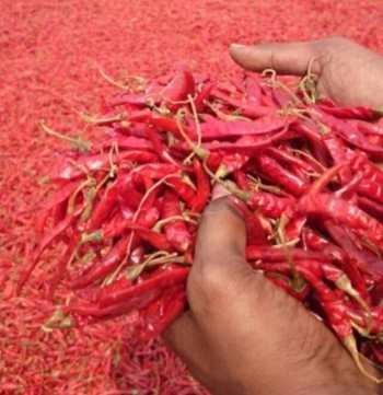 Come seccare il peperoncino piccante