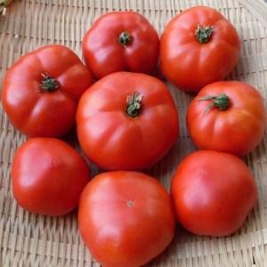 Tomate // Précoce Ararat (Graines)