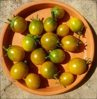 Tomate // Raisin vert