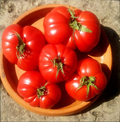 Tomate // Saint Pierre du Cantal