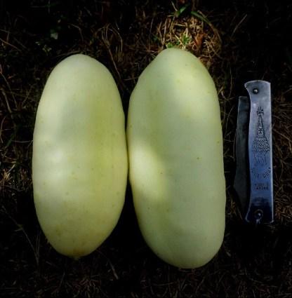 Concombre // Demi-long blanc
