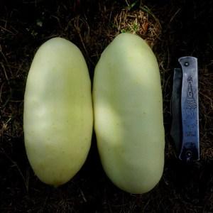Concombre // Demi-long blanc (Graines)