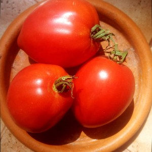 Tomate // Roussette d'Orembourg