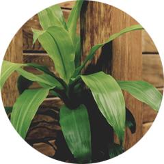 Conseils section plantes dépolluantes