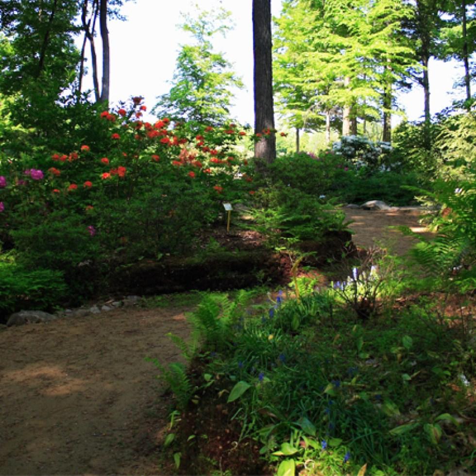 Sentiers-jardins-rhododendrons-2