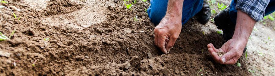 En-tete-article-planter-et-semer-Pepiniere-Villeneuve