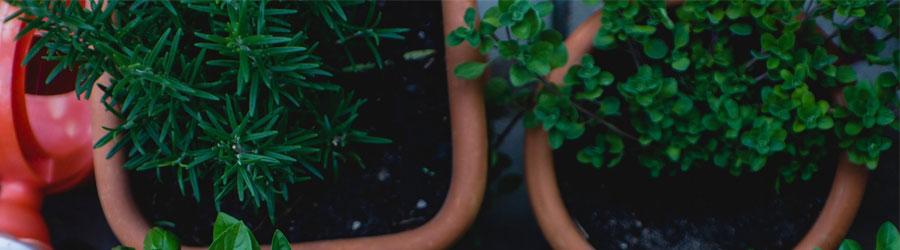 Comment Cultiver Des Légumes En Contenant