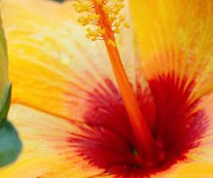 Comment Entrer Ses Plantes Tropicales Pour L'hiver