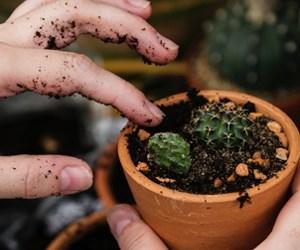 Rempotage Des Plantes D'interieur