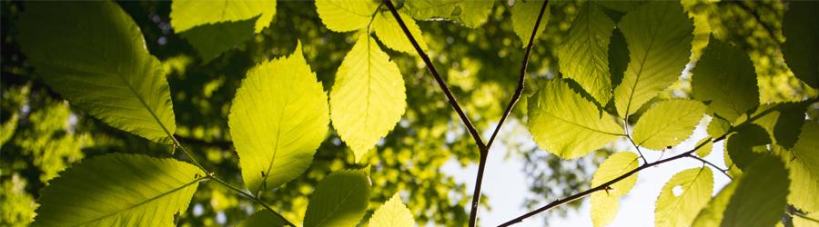 La plantation d'un arbre