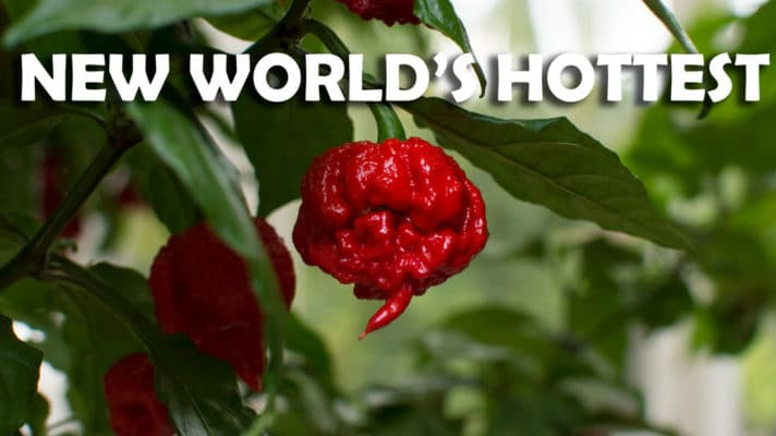 New World's Hottest Carolina Reaper
