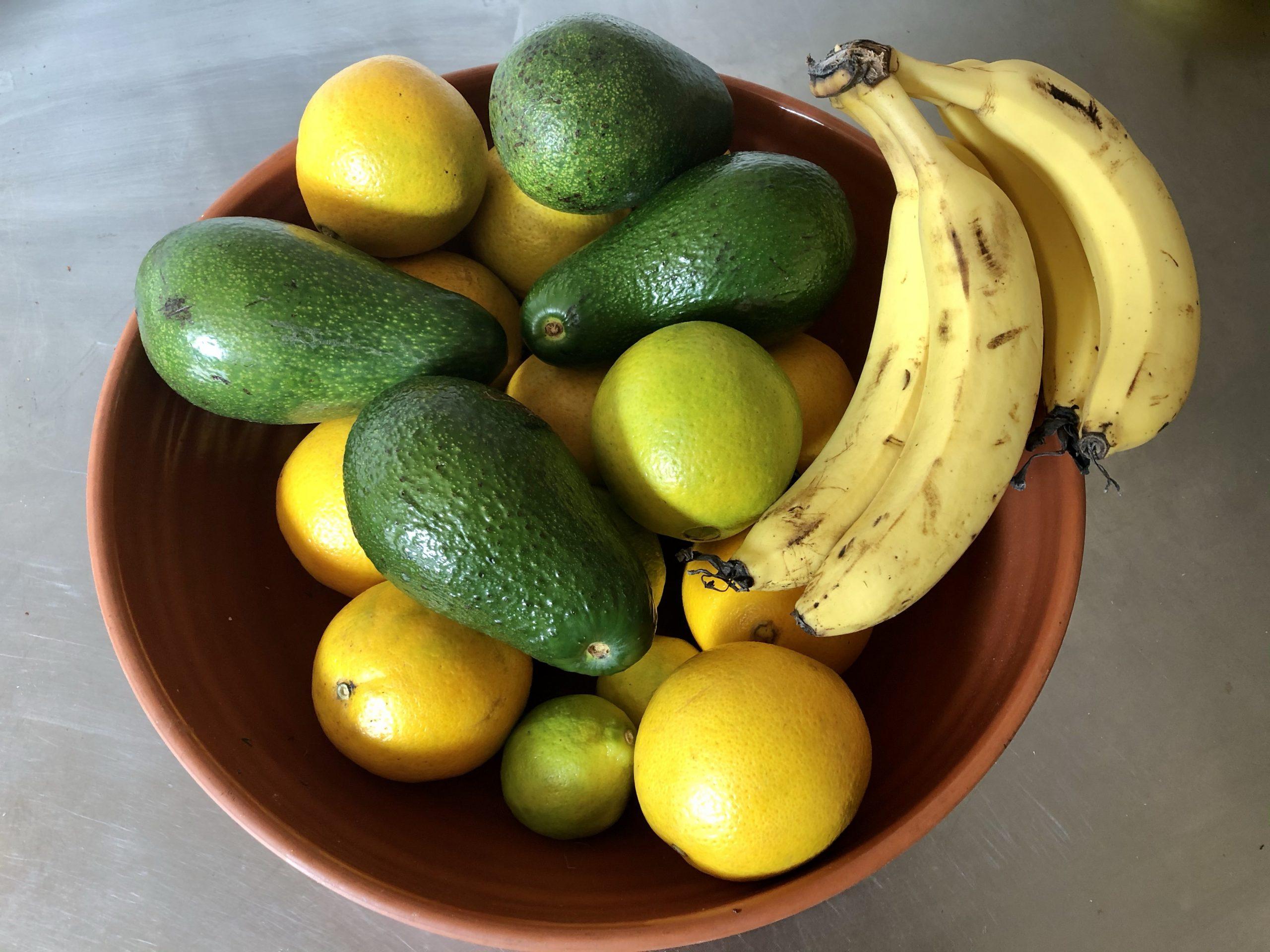 Autumn Still Life: Avocado, Bananas and Oranges