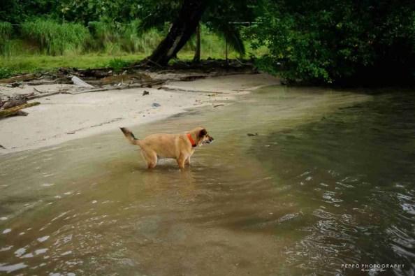 Choco por primera ves entrado al agua