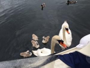 Å kalle opp båten sin etter den fuglen er veldig populært i Norge.
