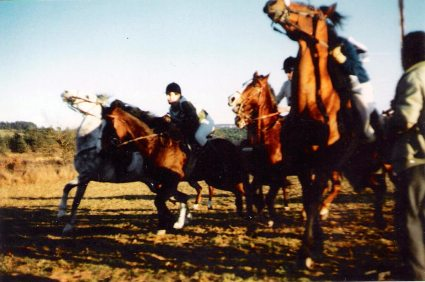 candelera 1989