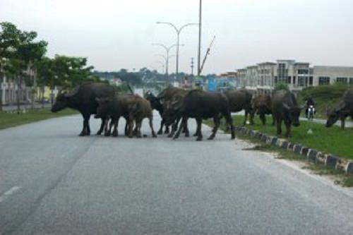 RM2,000 bagi setiap ekor haiwan