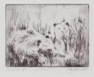 Anja Leko - Medvjedi