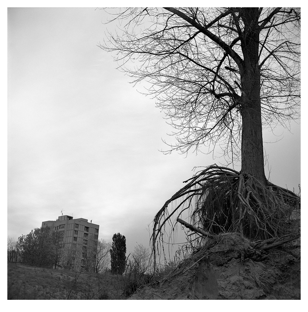 Roots (Vukovar, 2001.)