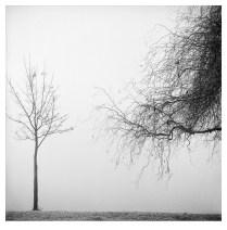 Trees In A Winter Fog - North (Zagreb, 1999.)