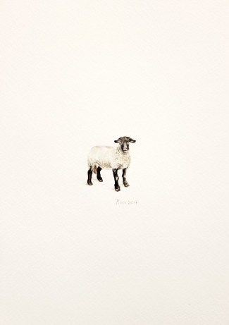 Mrs. Sheep, 15x21 cm, akvarel, 2017.
