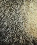 Crna ovca, ulje na platnu, 120x100cm, 2017.