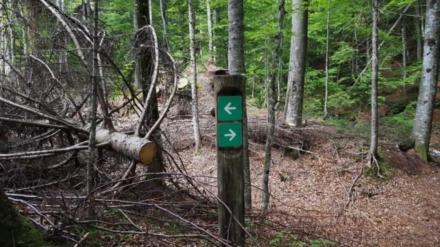 Oznake kroz šumu