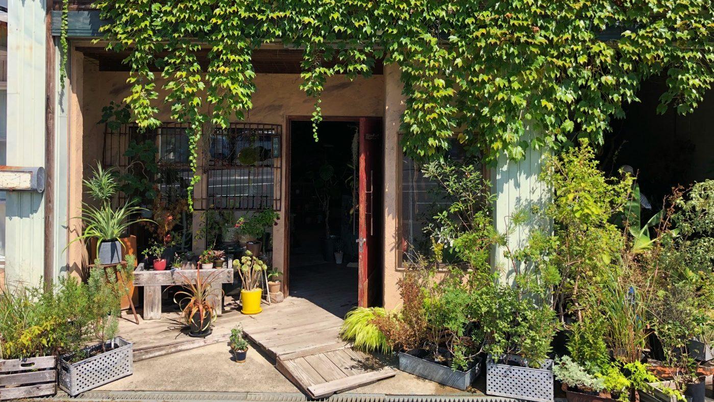 奈良で見つけたお洒落な植物に囲まれた植物屋『風草木』