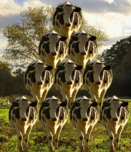 cowmid_HDR