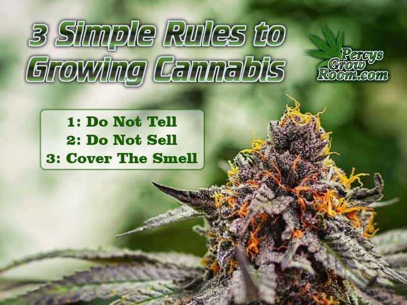 3 simple rules to growing cannabis, stay safe growing cannabis, how to not get caught growing weed, Cannabis growers forum & community, How to grow cannabis, how to grow weed, a step by step guide to growing weed, cannabis growers forum, need help with sick plant, what's wrong with my cannabis plant, percy's Grow Room, the Grow Room, Cannabis Grow Guides, weed growing forum, weed growers community, how to grow weed in coco, when is my cannabis plant ready for harvest, how to feed my cannabis plant, beginners guide to growing weed, how to grow weed for personal use, cannabis plant deficiency, how to germinate cannabis seeds, where to buy cannabis seeds, best weed growers website, Learn to grow cannabis, is it easy to grow weed,, Cannabis Growers forum, weed growers forum, How to grow legal cannabis, a step by step guide to growing weed, cannabis growing guide, tips for marijuana growers, growing cannabis plants for the first time, marijuana growers forum, marijuana growing tips, cannabis plant problems, cannabis plant help, marijuana growing expert advice