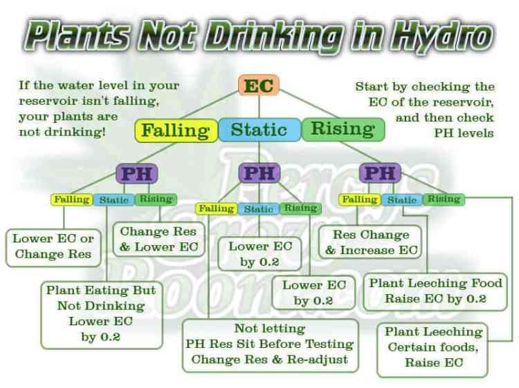 Plants not drinking in hydro, Ec Rising in hydro, hydroponics, growing cannabis in hydroponics, Cannabis Growers forum, weed growers forum, How to grow legal cannabis, a step by step guide to growing weed, cannabis growing guide, tips for marijuana growers, growing cannabis plants for the first time, marijuana growers forum, marijuana growing tips, cannabis plant problems, cannabis plant help, marijuana growing expert advice