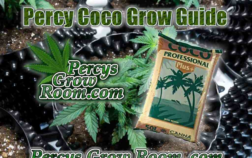 How to grow weed in coco, percys grow guides, percys grow room, How to grow legal cannabis, a step by step guide to growing weed, cannabis growing guide, tips for marijuana growers, growing cannabis plants for the first time, marijuana growers forum, marijuana growing tips, cannabis plant problems, cannabis plant help, marijuana growing expert advice.
