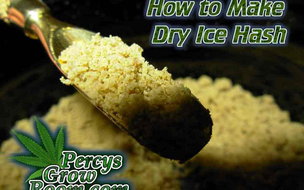 How to make dry ice hash, making dry ice hash, Cannabis growers forum & community, How to grow cannabis, how to grow weed, a step by step guide to growing weed, cannabis growers forum, need help with sick plant, what's wrong with my cannabis plant, percys Grow Room, the Grow Room, percys Grow Guides, we'd growing forum, weed growers community, how to grow weed in coco, when is my cannabis plant ready for harvest, how to feed my cannabis plant, beginners guide to growing weed, how to grow weed for personal use, cannabis plant deficiency, how to germinate cannabis seeds, where to buy cannabis seeds, best weed growers website
