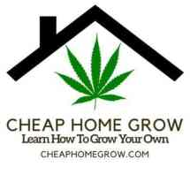Percys Grow Room Partners, Cannabis growers forum & community, How to grow cannabis, how to grow weed, a step by step guide to growing weed, cannabis growers forum, need help with sick plant, what's wrong with my cannabis plant, percys Grow Room, the Grow Room, percys Grow Guides, we'd growing forum, weed growers community, how to grow weed in coco, when is my cannabis plant ready for harvest, how to feed my cannabis plant, beginners guide to growing weed, how to grow weed for personal use, cannabis plant deficiency, how to germinate cannabis seeds, where to buy cannabis seeds, best weed growers website