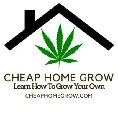 Cheap home grow, podcast, Cannabis growers forum & community, How to grow cannabis, how to grow weed, a step by step guide to growing weed, cannabis growers forum, need help with sick plant, what's wrong with my cannabis plant, percys Grow Room, the Grow Room, percys Grow Guides, we'd growing forum, weed growers community, how to grow weed in coco, when is my cannabis plant ready for harvest, how to feed my cannabis plant, beginners guide to growing weed, how to grow weed for personal use, cannabis plant deficiency, how to germinate cannabis seeds, where to buy cannabis seeds, best weed growers website