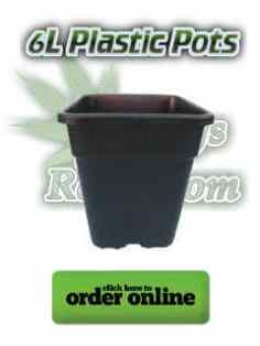 6l plastic pots for growing cannabis, Cannabis growers forum & community, How to grow cannabis, how to grow weed, a step by step guide to growing weed, cannabis growers forum, need help with sick plant, what's wrong with my cannabis plant, percys Grow Room, the Grow Room, percys Grow Guides, we'd growing forum, weed growers community, how to grow weed in coco, when is my cannabis plant ready for harvest, how to feed my cannabis plant, beginners guide to growing weed, how to grow weed for personal use, cannabis plant deficiency, how to germinate cannabis seeds, where to buy cannabis seeds, best weed growers website