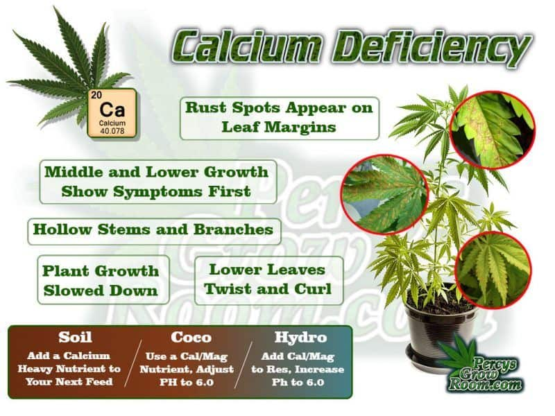 calcium deficiency in a cannabis plan, how to fix a calcium deficiency in a cannabis plant, what does cal def look like in a cannabis plant,, Cannabis growers forum & community, How to grow cannabis, how to grow weed, a step by step guide to growing weed, cannabis growers forum, need help with sick plant, what's wrong with my cannabis plant, percys Grow Room, the Grow Room, percys Grow Guides, we'd growing forum, weed growers community, how to grow weed in coco, when is my cannabis plant ready for harvest, how to feed my cannabis plant, beginners guide to growing weed, how to grow weed for personal use, cannabis plant deficiency, how to germinate cannabis seeds, where to buy cannabis seeds, best weed growers website, Cannabis Growers forum, weed growers forum, How to grow legal cannabis, a step by step guide to growing weed, cannabis growing guide, tips for marijuana growers, growing cannabis plants for the first time, marijuana growers forum, marijuana growing tips, cannabis plant problems, cannabis plant help, marijuana growing expert advice