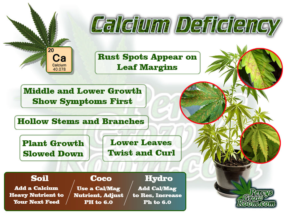 Calcium Deficiency in a cannabis plant, cal/mag def,