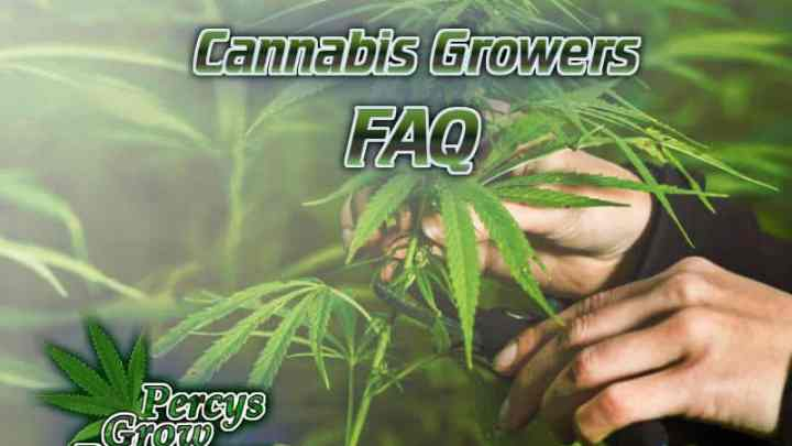 Cannabis growers FAQ, frequently asked questions about cannabis, what is hydroponics, grow weed in hydro, screen of green, what is scrogging, cannabis terminology, cannabis slang, Cannabis growers forum & community, How to grow cannabis, how to grow weed, a step by step guide to growing weed, cannabis growers forum, need help with sick plant, what's wrong with my cannabis plant, percy's Grow Room, the Grow Room, Cannabis Grow Guides, weed growing forum, weed growers community, how to grow weed in coco, when is my cannabis plant ready for harvest, how to feed my cannabis plant, beginners guide to growing weed, how to grow weed for personal use, cannabis plant deficiency, how to germinate cannabis seeds, where to buy cannabis seeds, best weed growers website, Learn to grow cannabis, is it easy to grow weed,, Cannabis Growers forum, weed growers forum, How to grow legal cannabis, a step by step guide to growing weed, cannabis growing guide, tips for marijuana growers, growing cannabis plants for the first time, marijuana growers forum, marijuana growing tips, cannabis plant problems, cannabis plant help, marijuana growing expert advice