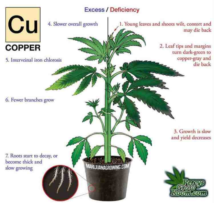 Cannabis growers forum & community, How to grow cannabis, how to grow weed, a step by step guide to growing weed, cannabis growers forum, need help with sick plant, what's wrong with my cannabis plant, percy's Grow Room, the Grow Room, Cannabis Grow Guides, weed growing forum, weed growers community, how to grow weed in coco, when is my cannabis plant ready for harvest, how to feed my cannabis plant, beginners guide to growing weed, how to grow weed for personal use, cannabis plant deficiency, how to germinate cannabis seeds, where to buy cannabis seeds, best weed growers website, Learn to grow cannabis, is it easy to grow weed,