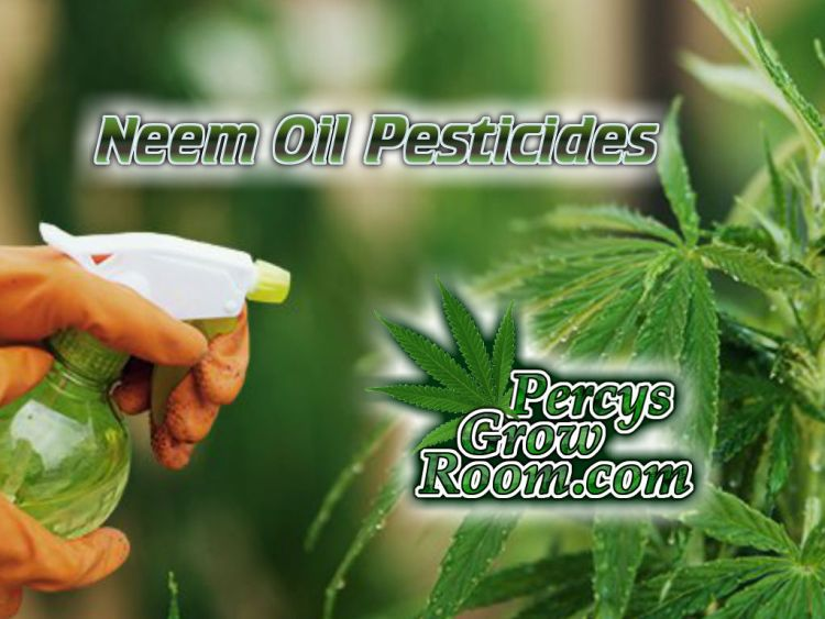 Neem oil pesticides, neem oil, homemade pesticides, organic pesticides, kill bugs on a cannabis plant, Cannabis growers forum & community, How to grow cannabis, how to grow weed, a step by step guide to growing weed, cannabis growers forum, need help with sick plant, what's wrong with my cannabis plant, percys Grow Room, the Grow Room, percys Grow Guides, we'd growing forum, weed growers community, how to grow weed in coco, when is my cannabis plant ready for harvest, how to feed my cannabis plant, beginners guide to growing weed, how to grow weed for personal use, cannabis plant deficiency, how to germinate cannabis seeds, where to buy cannabis seeds, best weed growers website, Cannabis Growers forum, weed growers forum, How to grow legal cannabis, a step by step guide to growing weed, cannabis growing guide, tips for marijuana growers, growing cannabis plants for the first time, marijuana growers forum, marijuana growing tips, cannabis plant problems, cannabis plant help, marijuana growing expert advice