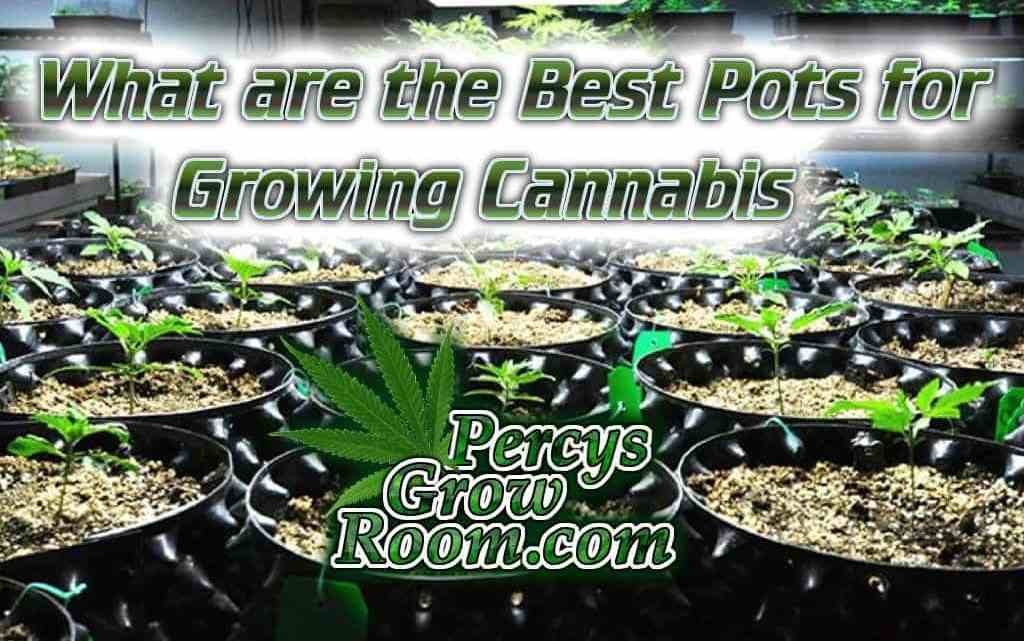 What are the best pots for growing cannabis, air pots, fabric pots, plastic pots, what potas size to use when growing cannabis, pot sizes plenty of air to root zone, designed for airpruning, available in many sizes, re usable, Cannabis growers forum & community, How to grow cannabis, how to grow weed, a step by step guide to growing weed, cannabis growers forum, need help with sick plant, what's wrong with my cannabis plant, percys Grow Room, the Grow Room, percys Grow Guides, we'd growing forum, weed growers community, how to grow weed in coco, when is my cannabis plant ready for harvest, how to feed my cannabis plant, beginners guide to growing weed, how to grow weed for personal use, cannabis plant deficiency, how to germinate cannabis seeds, where to buy cannabis seeds, best weed growers website