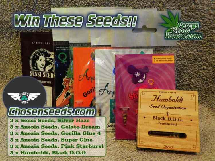Percys pick a card chosen seeds comp