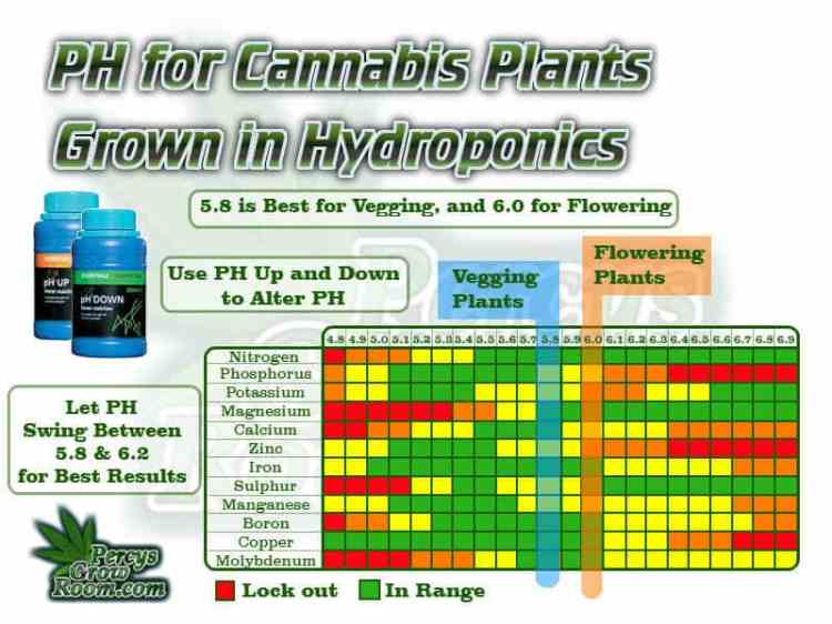 ph for cannabis plants grown in hydroponics, 5.8 is best for vegging plants, and 60 for flowering plants, ph charts for plants grown in hydro, let ph swing between 5.8 and 6.2, Cannabis growers forum & community, How to grow cannabis, how to grow weed, a step by step guide to growing weed, cannabis growers forum, need help with sick plant, what's wrong with my cannabis plant, percy's Grow Room, the Grow Room, Cannabis Grow Guides, weed growing forum, weed growers community, how to grow weed in coco, when is my cannabis plant ready for harvest, how to feed my cannabis plant, beginners guide to growing weed, how to grow weed for personal use, cannabis plant deficiency, how to germinate cannabis seeds, where to buy cannabis seeds, best weed growers website, Learn to grow cannabis, is it easy to grow weed,